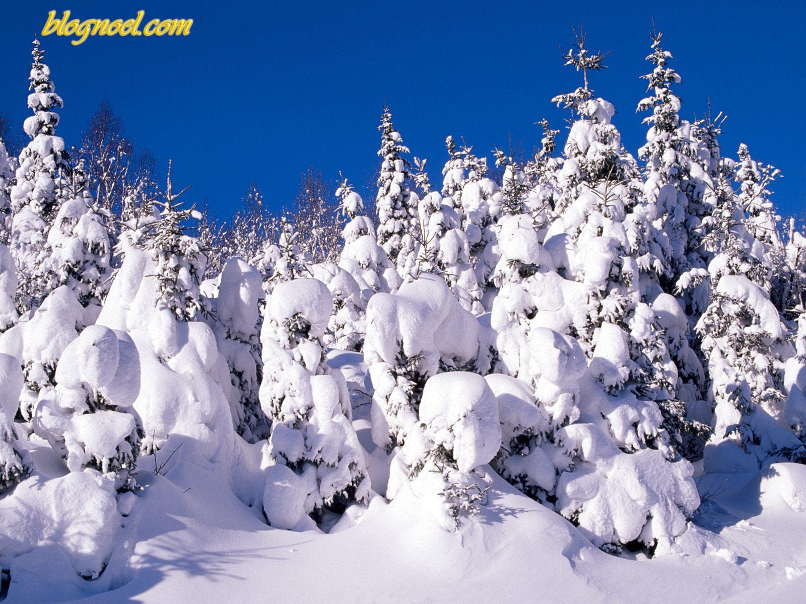 dans fond ecran neige fond-ecran-noel-sapin-neig%C3%A9